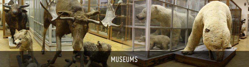 Портал КФУ \ On Campus \ Museums