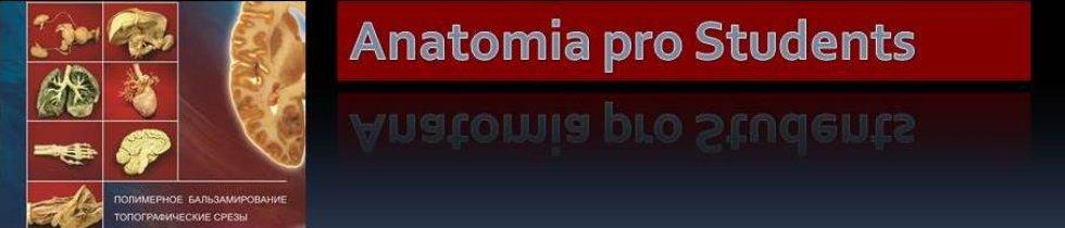Портал КФУ \ Образование \ Институт фундаментальной медицины и биологии \ Структура института \ Кафедры \ Кафедра морфологии и общей патологии \ Учебный процесс \ Анатомия