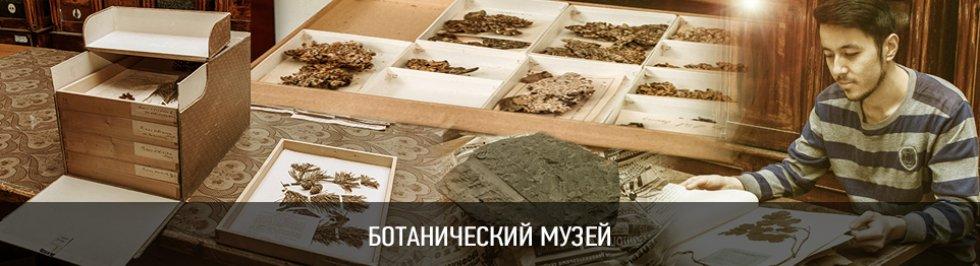 Портал КФУ \ Университет и общество \ Музеи \ Ботанический музей