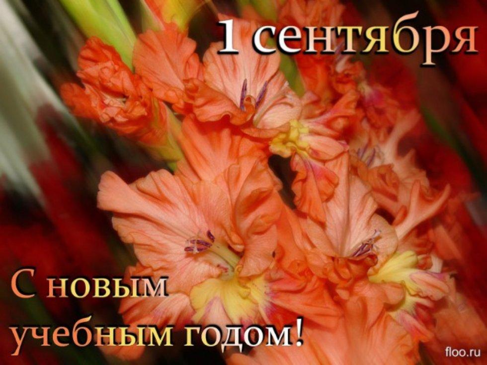 Поздравляем с профессиональным праздником! 77485943_large_3241851_b63