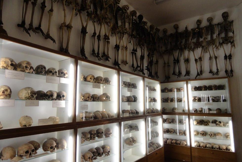 казань анатомический музей театр фото низких