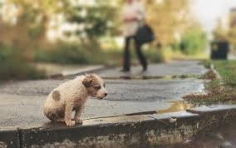 Помоги бездомным животным ,Помоги бездомным животным