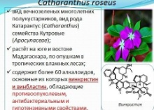 Kazan University researchers developed new unique method of microcloning Сatharanthus roseus